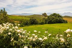 Landscape South Africa Royalty Free Stock Photo