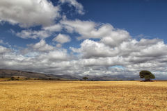 Landscape in South Africa Stock Photo