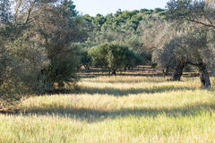 Landscape in the south central of Crete near Matala Stock Photos