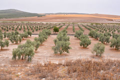 Landscape in South Spain Royalty Free Stock Photo