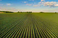 Landscape of soybean field in plains stock photos