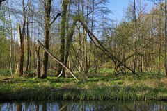 Landscape in the Spree woods & x28;Spreewald& x29;, Germany. Landscape with a little waterway in the Spree woods & x28;Spreewald& x29;, Brandenburg, Germany Stock Photo