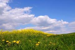Landscape spring Stock Images