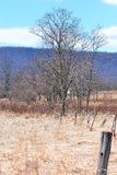 Landscape 0001. Spring in central Pennsylvania Cumberland Valley Cumberland County - budding trees and old electric fenceline in long grass field near mountain Stock Photo