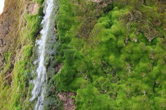 Landscape. Spring flowing over moss-overgrown stones Stock Image