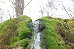 Landscape. Spring flowing over moss-overgrown stones Royalty Free Stock Photos