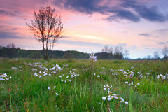 Landscape of a spring green meadow in the morning at dawn with a blurred background and a colorful sky Royalty Free Stock Photo