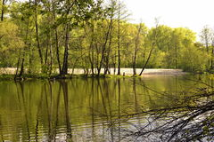Landscape, Spring Lake, trees in the water. Landscape, Spring Lake, trees reflected in the water Stock Images