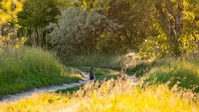 Landscape with a wild hare Royalty Free Stock Image