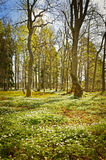 Landscape in spring. Texture conceptual images Royalty Free Stock Images
