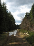 Landscape during spring in the Vosges Royalty Free Stock Images