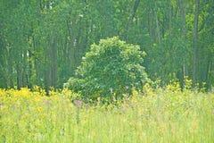 Landscape in Spring Stock Images