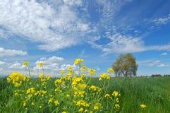 landscape springtime Fotografering för Bildbyråer