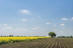 Landscape in springtime Stock Photo