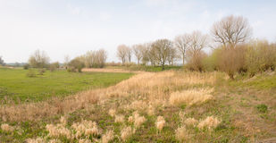 Landscape in springtime Stock Image