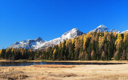 Landscape in St. Moritz Royalty Free Stock Photo