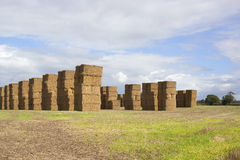 Landscape with stacked square bales Royalty Free Stock Image