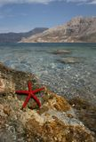 Landscape with starfish Royalty Free Stock Photography