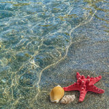 Landscape with starfish on sandy beach Stock Photography