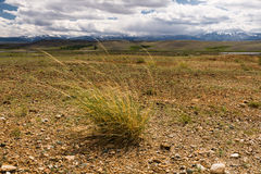 Landscape steppe plants Royalty Free Stock Images