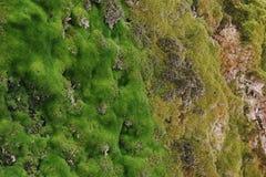 Landscape. Stones overgrown with moss. Nizhnekamsk Stock Photography