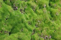 Landscape. Stones overgrown with moss. Nizhnekamsk Royalty Free Stock Image