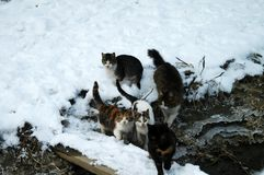 Cats on the snow 1. Landscape stories in the winter season on the Borcea arm Royalty Free Stock Photos