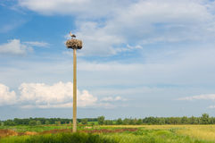 Landscape with stork hermit nest against blue evening sky Royalty Free Stock Image
