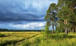 Landscape storm clouds at sunset in the forest royalty free stock image