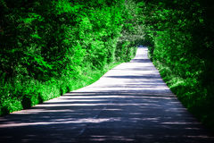 Landscape of straight road under the trees.Green tunnel and an empty asphalt road Royalty Free Stock Images
