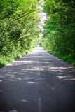 Landscape of straight road under the trees.Green tunnel and an empty asphalt road.  Stock Image