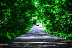 Landscape of straight road under the trees.Green tunnel and an empty asphalt road.  Stock Images