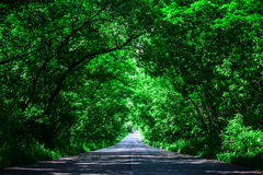 Landscape of straight road under the trees.Green tunnel and an empty asphalt road.  Stock Photos