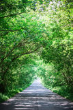 Landscape of straight road under the trees.Green tunnel and an empty asphalt road.  Royalty Free Stock Photo