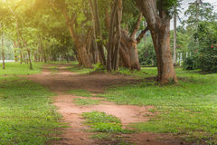 Landscape of straight road under the trees Royalty Free Stock Photos