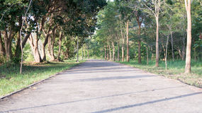 Landscape of straight road under the trees road tree Stock Images