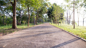 Landscape of straight road under the trees road tree Royalty Free Stock Photos