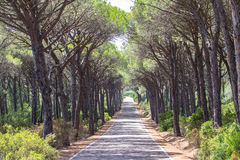 Landscape of straight road under the trees on Sardinia Island, I Royalty Free Stock Photography