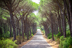 Landscape of straight road under the trees on Sardinia Island, Italy Royalty Free Stock Photo