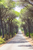 Landscape of straight road under the trees on Sardinia Island, Ityla Royalty Free Stock Photos