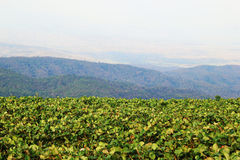 The landscape with strawberry fields in the mountains. Travel to Doi Mon Cham, Chiang Mai, Thailand. The landscape with strawberry fields in the mountains stock photography