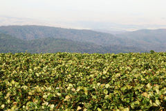 The landscape with strawberry fields in the mountains. Travel to Doi Mon Cham, Chiang Mai, Thailand. The landscape with strawberry fields in the mountains stock image