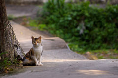 The landscape of the stray cat Royalty Free Stock Photography