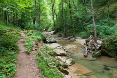 Landscape with stream in forest Stock Photo
