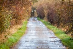 Landscape and street in autumn spring outdoor Royalty Free Stock Photos