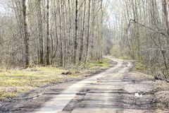 In the landscape in the suburban forest with the road going into the distance. Crown-a set of branches and leaves at the top of the plant, continuing the trunk royalty free stock image