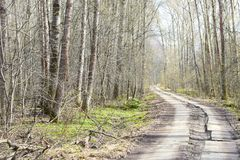 Landscape in the suburban forest with the road going into the distance and the distant sky. Crown-a set of branches and leaves at the top of the plant royalty free stock image