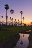 Landscape sugar palm tree refect on water in twilight Royalty Free Stock Photos