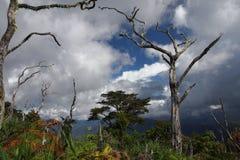 Landscape / Sumatra / Indonesia Stock Image