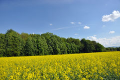 Landscape in summer Royalty Free Stock Photography